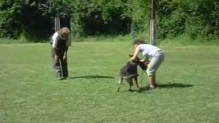 Wolf's Lissy Bite Training