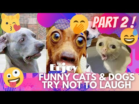 🤣 It's TIME for SUPER LAUGH! 🤣FUNNY CATS & DOGS🙀🐶BEST FUNNY MOMENTS PART 2 🤪 | TRY NOT TO LAUGH 🤭