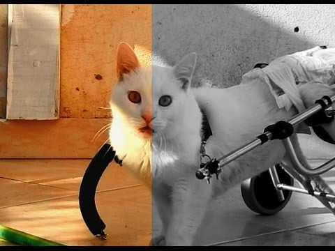 Requiem for a cat - Melinos