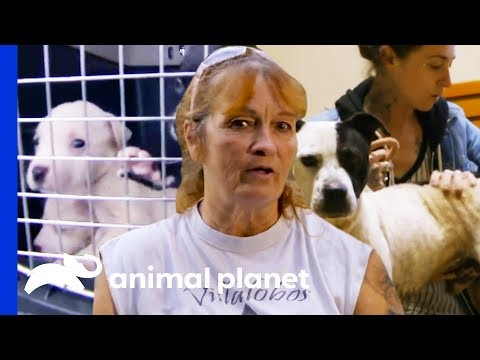 Rescuing Precious Dogs From The Streets of New Orleans | Pit Bulls & Parolees | Compilation