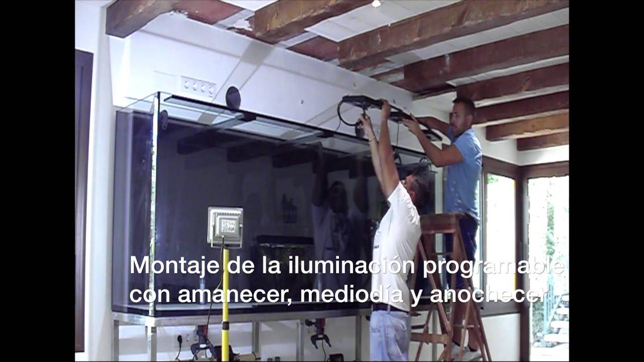 Acuarios a medida barcelona montaje e instalaci n de un for Acuarios a medida