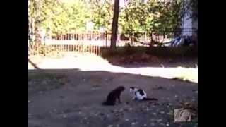 Видео про кошек.Драка кошек.