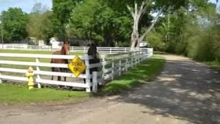 Real estate for sale in Carencro Louisiana - MLS# L13243299