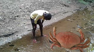 PRIMITIVE TECHNOLOGY - Catch and cooking GIANT crab in jungle | jungle foods