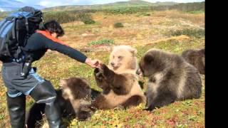 Мой фильм : Животный мир Камчатки
