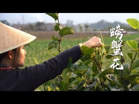 Pick some fresh crab flowers and tips, and make some delicate and small dishes from YouTube · Duration:  3 minutes 57 seconds