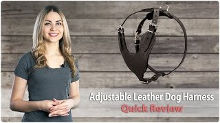 Adjustable Leather Dog Harness For Different Kinds Of Training - Review
