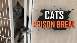 Cat Cage Escape! Cats Breaking out Cage compilation 2019! (They Are So Smart!)