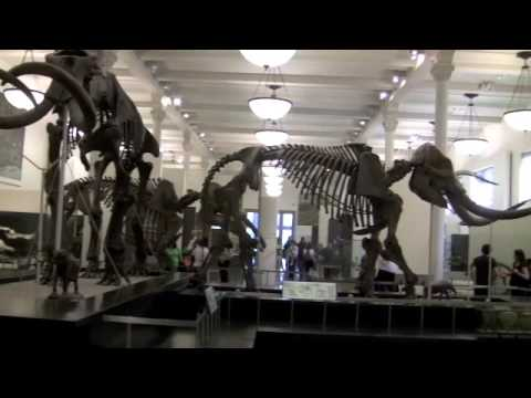 Museum of Natural History - New York