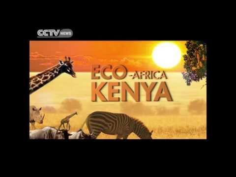 Mara Migration Promo 3