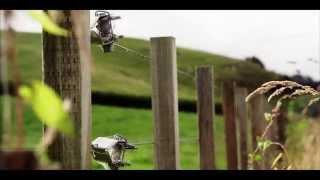 New Zealand in 4K (Ultra HD) thumbnail