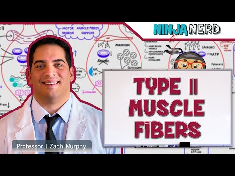 Myology: Type II Muscle Fibers | Type IIa & IIx