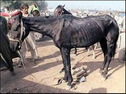 essays on horse abuse Animal abuse stories published: october 29, 2013 the following stories are abuse/neglect stories that were previously in our newsletters justice for horses.