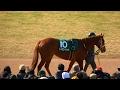 レッツゴードンキ、京都牝馬Sのパドック。現地映像、京都競馬場