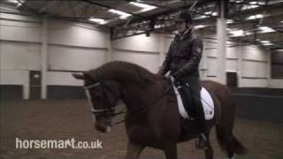 How To Ride Medium Walk, Extended Walk And Free Walk In Dressage