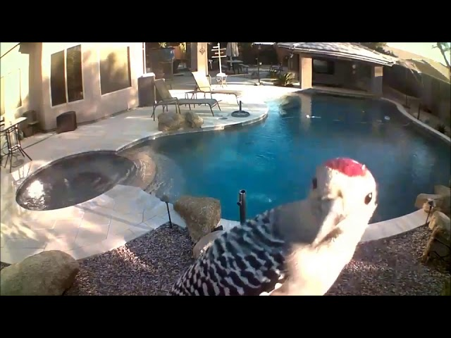 Woodpecker Frantically Pecks at Security Camera – 999418-1