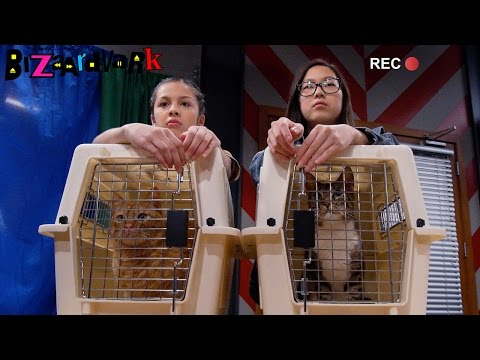 Street Cat Attack | Bizaardvark | Disney Channel
