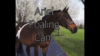 Ariel Stall/Foaling Cam (NIGHT 4) (THE FOAL IS HERE)