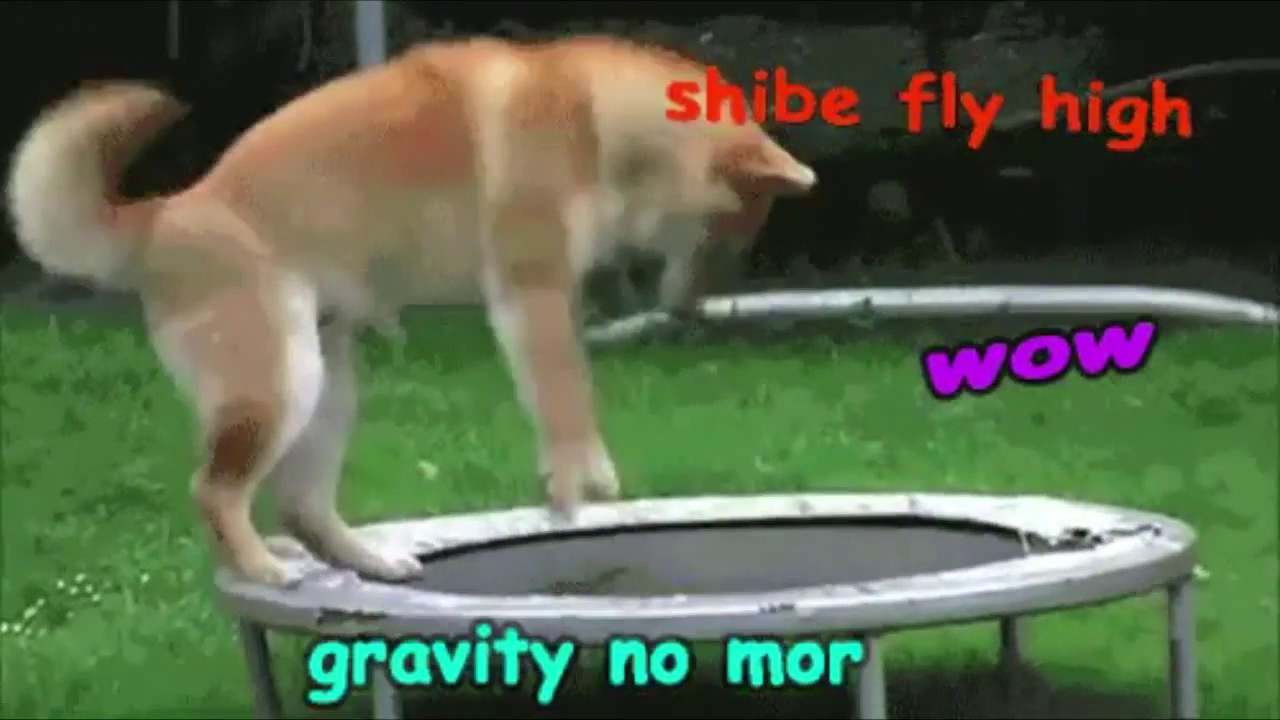 Doge Gif Compilation Youtube