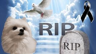 Gabe The Dog Muere!