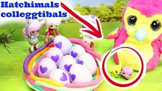 HATCHIMALS COLLEGGTIBALS HATCHIMALS EGGS, SHOPKINS HELPED HATCHIMALS WITH EGGS, HATCHIMALS LAYS EGGS