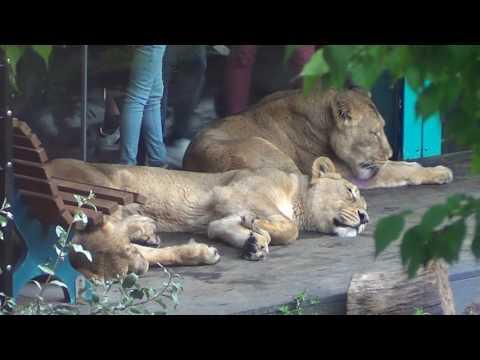 London Zoo, part 1