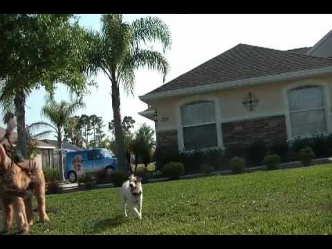 Dog Fence Demonstation