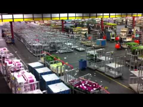 the largest flower market in the world aalsmeer holland