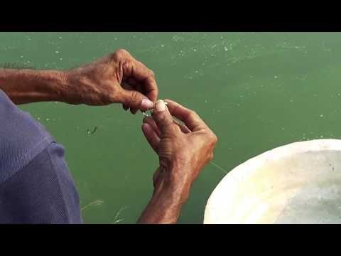 Professional Fish Hunter Caught Fish By Fishing Rod In Village Pond