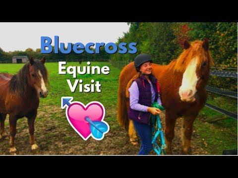 Visiting Horses at the Blue-cross /vlogtober 1/