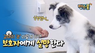 things to get dogs disappointed, dog hand training│Mung school beginner guardian with Kang trainer