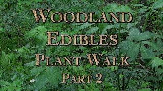 Woodland Edibles Plant Walk Part 2