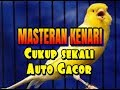 Masteran Kenari Cukup Sekali Langsung Auto Gacor  Mp3 - Mp4 Download