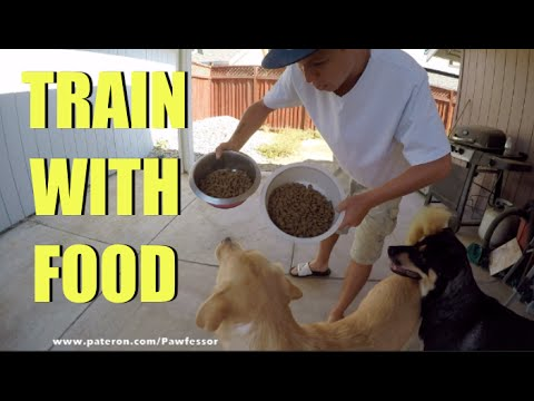 Every Dog Is Motivated By Food !