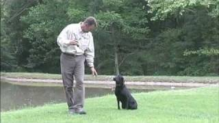 Tri-tronics Dog Basic Training Part 2 Of 2