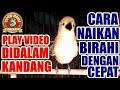 Full Nyipow Nagen Naikan Birahi Cipoh Sirtu Lawan Dengan Cepat  Mp3 - Mp4 Download