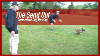 How to Teach Your Dog the Send Out Command