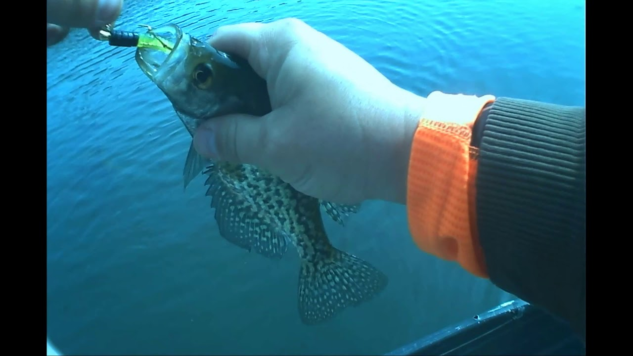 Crappie Fishing in WV on my Birthday!