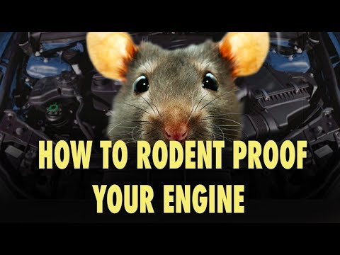 How To Rodent Proof Your Engine - The Easy Way