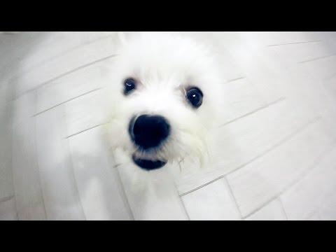 Покупка собаки. Как купить собаку?