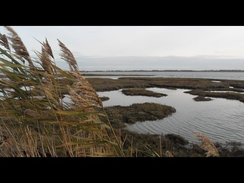 TOLLESBURY MARSHES (PART 1 OF 2: 19/11/16)