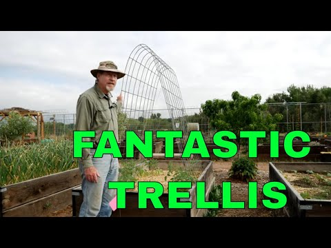 The Best Tomato Trellis