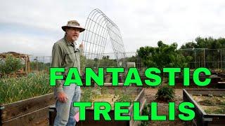 The Best Tomato Trellis