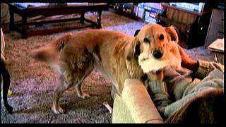 Remembering Maggie & Molly - Golden Retriever & Labrador/spitz