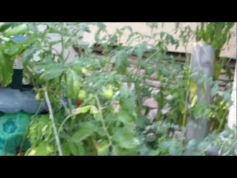Natashia Garden Part 1