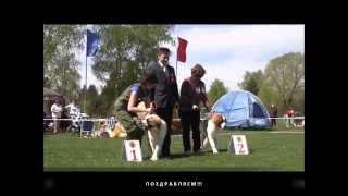 Московская сторожевая ЧК 2014 (2) Суки Класс Беби, Сравнение Лучший Беби