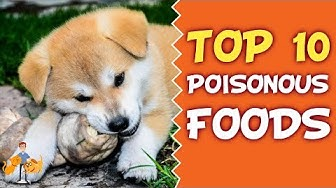 Common Pet Poisons: Top 10 Poisonous Food for Cats and Dogs