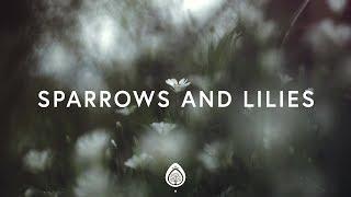 Pat Barrett ~ Sparrows And Lilies (Lyrics)
