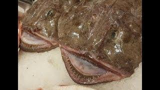Как правильно приготовить морского черта! У этого Мега хищника Супер вкусное мясо!