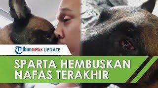 Anjing Sparta Mati, Bima Aryo Menangis dan Memeluknya